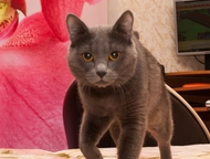 Красноярск: Отдам кота Отдаётся кот, очень добрый и ласковый. В квартирные условия. Возраст почти 2 года. Мимо лотка с наполнителем не промажет