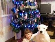 Красноярск: Отдам в серьезные и профессиональные руки Отдам по семейным обстоятельствам в серьезные и профессиональные руки. Собака ласковая, но с характером. Тре