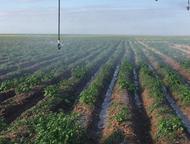 Ранний картофель Продаем ранний картофель, урожай 2016 года. Мы выращиваем картофель сами. Цена договорная. Доставка в любой регион России., Астрахань - Разное