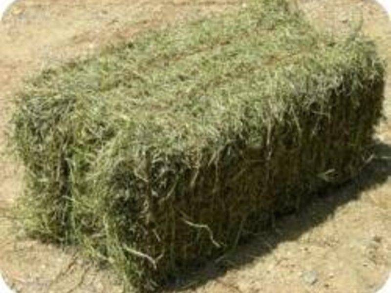 продажа овса в ярославской области фактических