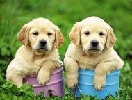 Дрессировка собак в Заинске Ваша собака вышла из-под контроля?   Ваш щенок не понимает команд?  Мечтаете о послушном и верном друге?  Опытный инструкт, Набережные Челны - Услуги для животных