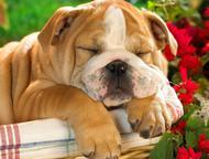 Дрессировка и воспитание собак в Набережных Челнах Дрессировка собак в Набережных Челнах, представляет собой кропотливый и достаточно сложный труд. Но, Набережные Челны - Услуги для животных