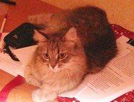 пропала кошечка 08. 11. 15 пропала домашняя кошка, выбежала из подъезда по адресу:Новокуйбышевск, ул. Дзержинского 38а, 2 подъезд. Кошка среднего разм, Новокуйбышевск - Потерянные