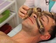 Владивосток: Массаж маска улитками Ахатина Массаж маска улиткотерапия прекрасное средство для омоложения кожи. Улитки очищают кожу, снимают усталость и тусклость к
